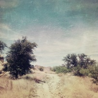 Arizona - Texas Valley