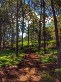 Path Not Taken